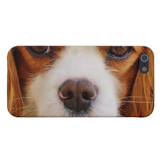 dog iPhone SE/5/5s cover