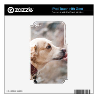 dog iPod touch 4G skins