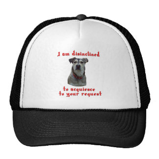 Dog is disinclined hats