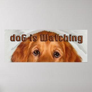 doG Is Watching Golden retriever Poster