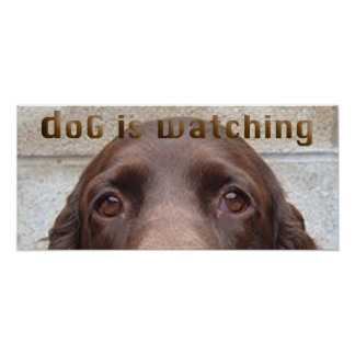 doG Is Watching Poster