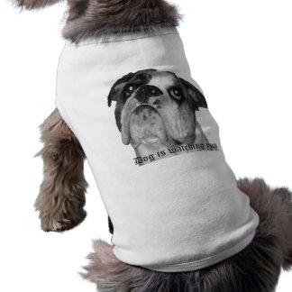 Dog is watching you dog shirt. pet tee shirt