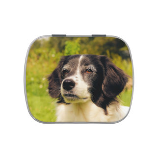 Dog Jelly Belly Tins