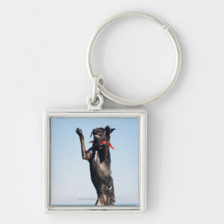 Dog jumping in water key chain