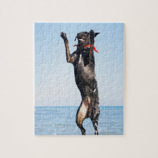 Dog jumping in water puzzle