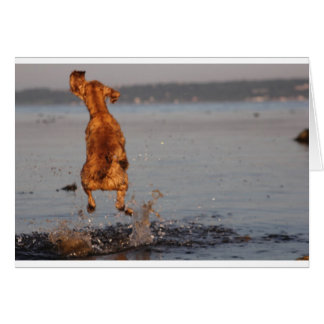 dog jumping out of water card