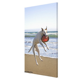 Dog jumping to catch a frisbee on beach canvas print