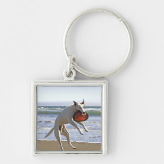 Dog jumping to catch a frisbee on beach key chain