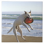Dog jumping to catch a frisbee on beach large square tile