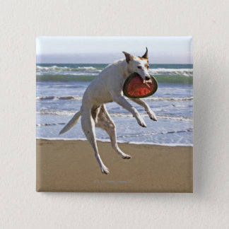 Dog jumping to catch a frisbee on beach pinback button