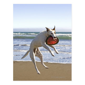 Dog jumping to catch a frisbee on beach postcard