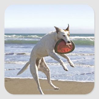 Dog jumping to catch a frisbee on beach square sticker