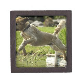 Dog jumps into pond gift box