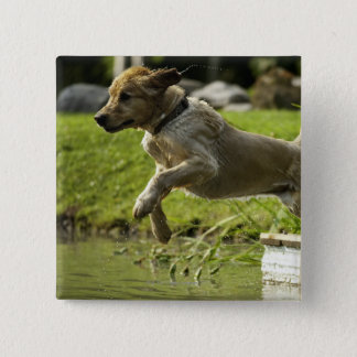 Dog jumps into pond pinback button
