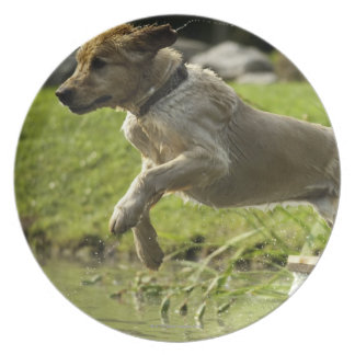 Dog jumps into pond party plates