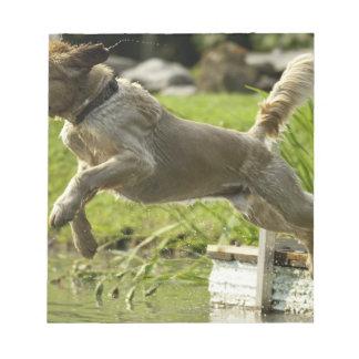 Dog jumps into pond scratch pad