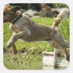 Dog jumps into pond sticker