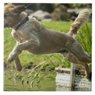 Dog jumps into pond tile