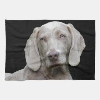 dog kitchen towel