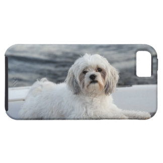 Dog laying by the water iPhone SE/5/5s case