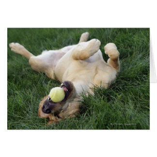 Dog laying upside down in grass with tennis ball greeting card