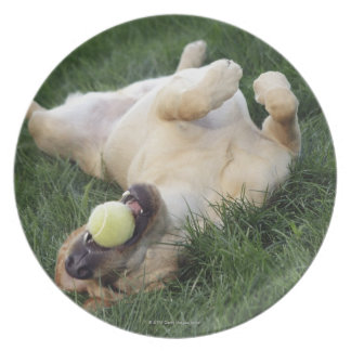 Dog laying upside down in grass with tennis ball plate