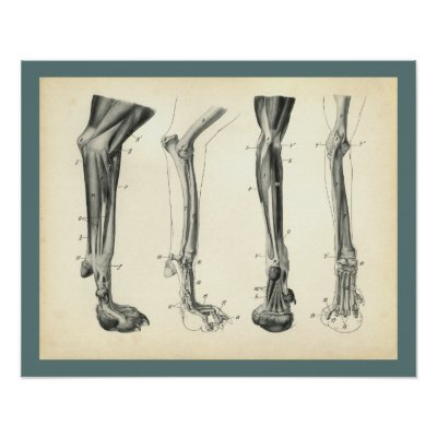 Dog Anatomy Poster Muscles And Bones Zazzle