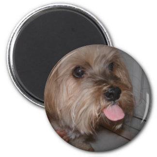 Dog Licking Air Magnet
