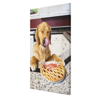 Dog licking nose after eating cherry pie in canvas print
