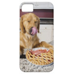 Dog licking nose after eating cherry pie in iPhone SE/5/5s case