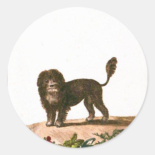 Dog - Lion Dog Classic Round Sticker