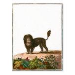 Dog - Lion Dog Postcard