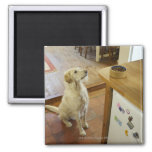 Dog looking at food on table. fridge magnets