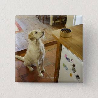Dog looking at food on table. pinback button