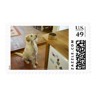 Dog looking at food on table. postage
