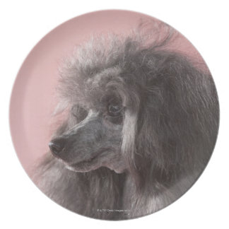 Dog looking away dinner plate