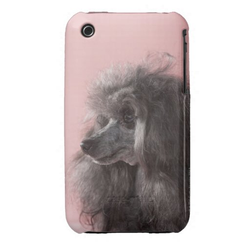 Dog looking away iPhone 3 Case-Mate cases