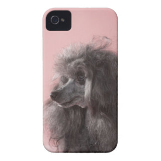 Dog looking away iPhone 4 Case-Mate case