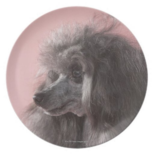 Dog looking away party plate