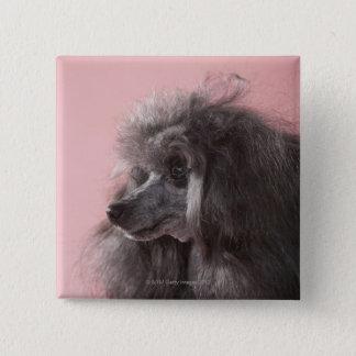 Dog looking away pinback button