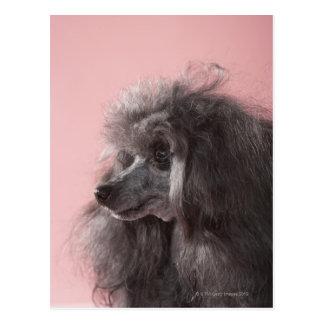 Dog looking away postcard