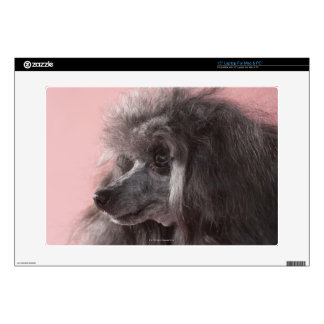 Dog looking away laptop decals