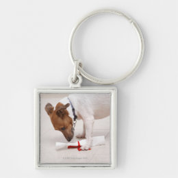 Dog looking down a diploma keychain