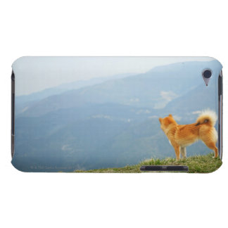 Dog looking down from on  hill iPod touch cover