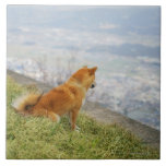 Dog looking down from on hill large square tile