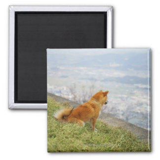 Dog looking down from on hill 2 inch square magnet