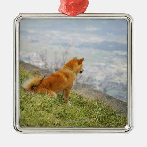 Dog looking down from on hill square metal christmas ornament