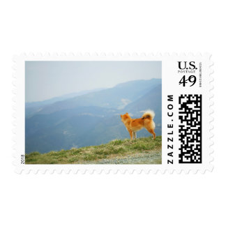 Dog looking down from on  hill stamp