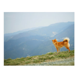 Dog looking down from on  hill postcard