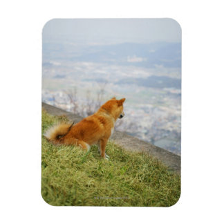 Dog looking down from on hill rectangular photo magnet